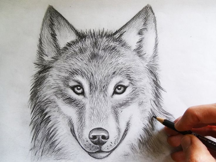 Drawn werewolf pencil drawing Face Pinterest Drawing Wolf Face