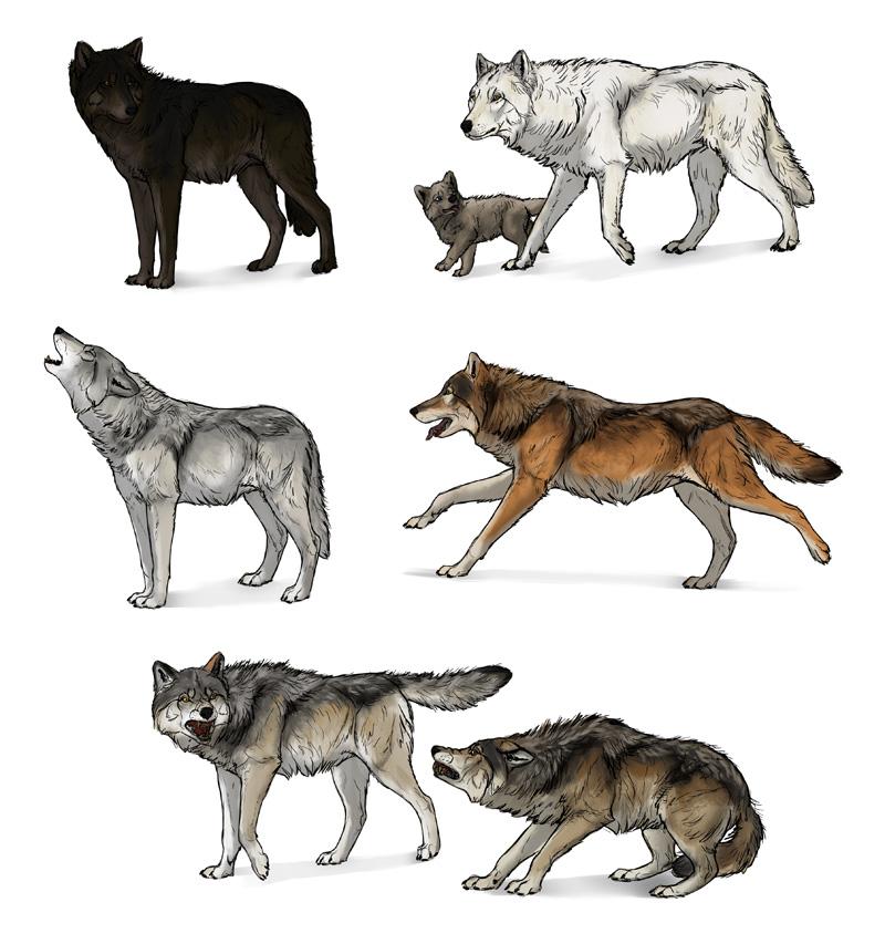 Drawn photos wolf A draw How Wolf: Draw