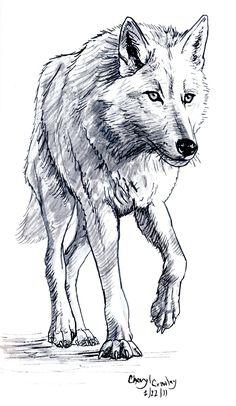 Drawn werewolf really Stuff drew White on drawing