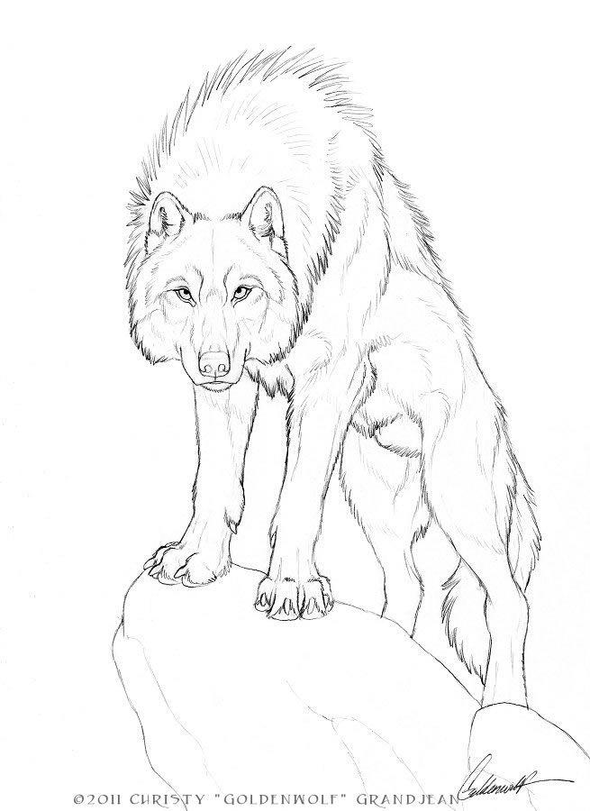 Drawn werewolf really On drawings Adonis @deviantART I