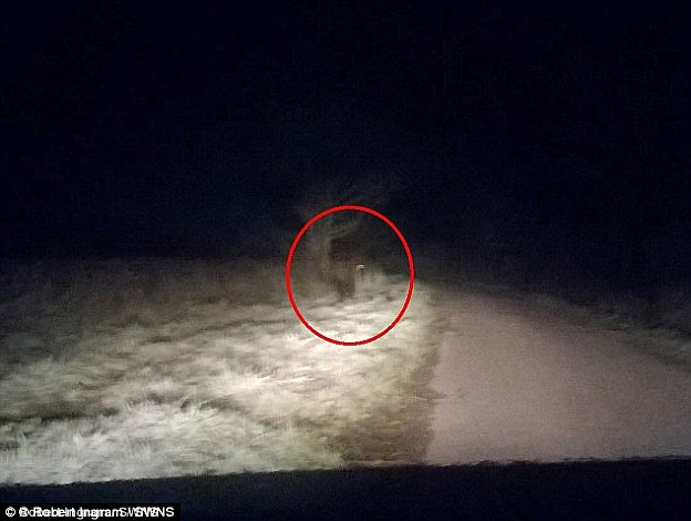 Drawn wolfman sighting In spot They jumped beast