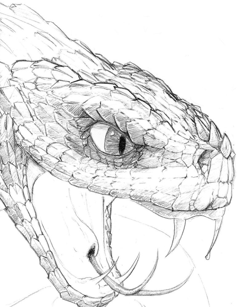 Drawn reptile face Snake Snake head Search Search