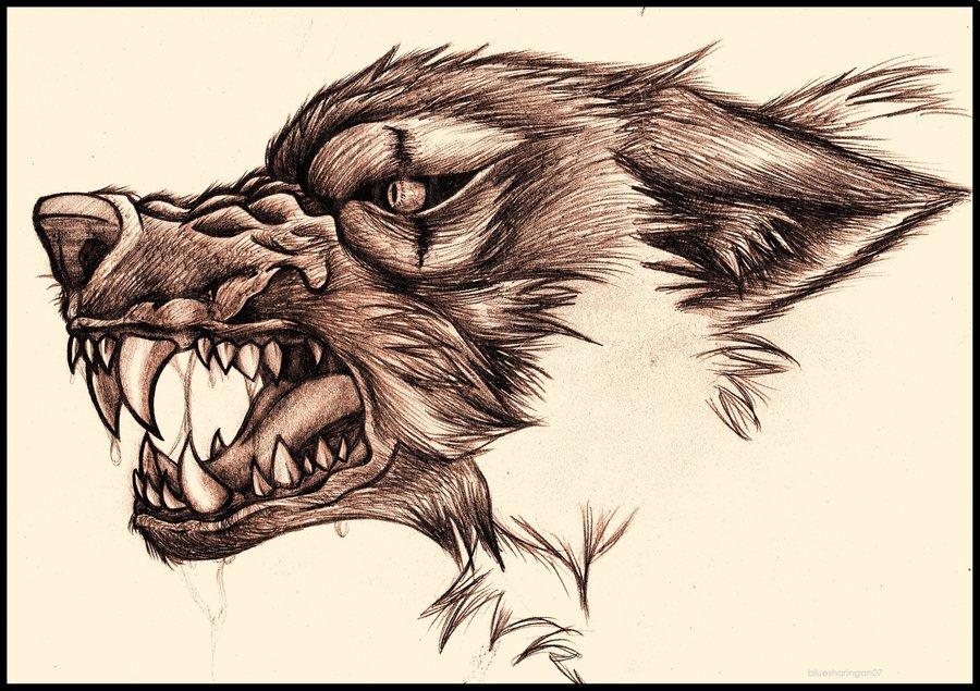 Drawn werewolf snarling wolf By DeviantArt by bluesharingan07 Wolf