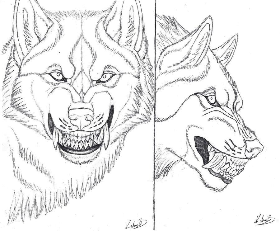 Drawn werewolf snarling wolf Art Lycan Tutorials References 24