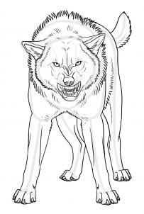 Drawn werewolf snarling wolf Step Step an to forest