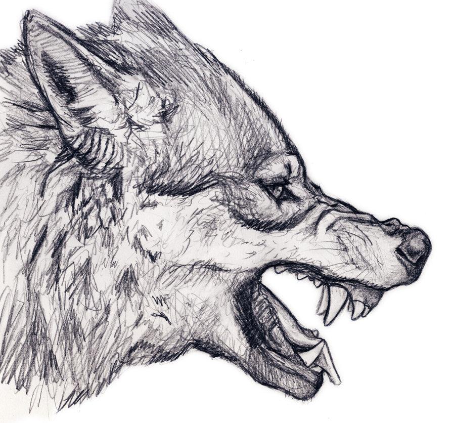 Drawn werewolf snarling wolf Wolf  deviantART silvercrossfox by
