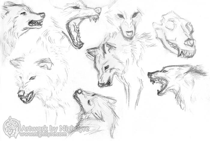 Drawn werewolf snarling wolf Search Google Are wolves Literature