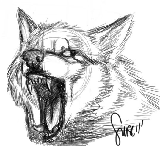 Drawn werewolf snarling wolf And Wolves Pinterest Sketches Wolf