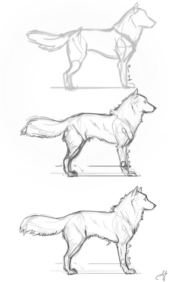 Drawn werewolf stair Whisperpntr DrawingAnime Step com Step