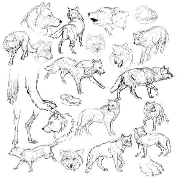Drawn werewolf warrior Model study to and Werewolf
