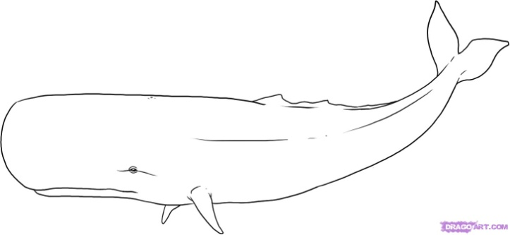 Drawn whale Drawing to Drawing Tutorials Whales