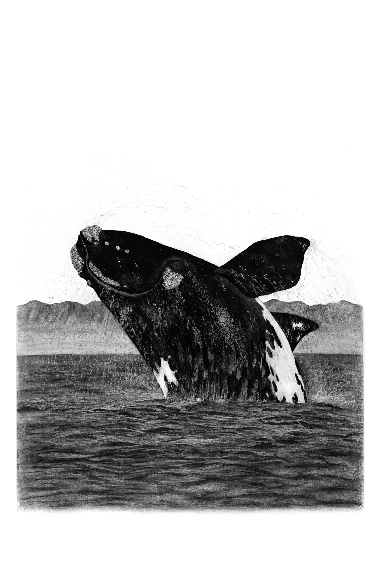Drawn whale realistic Whale art Whale Drawings of