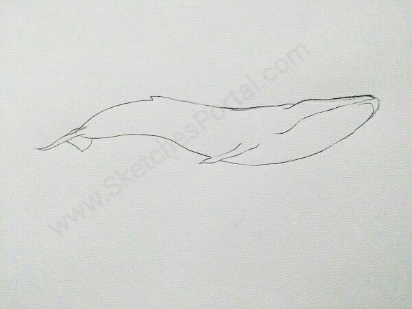 Drawn whale humongous A – Draw how to