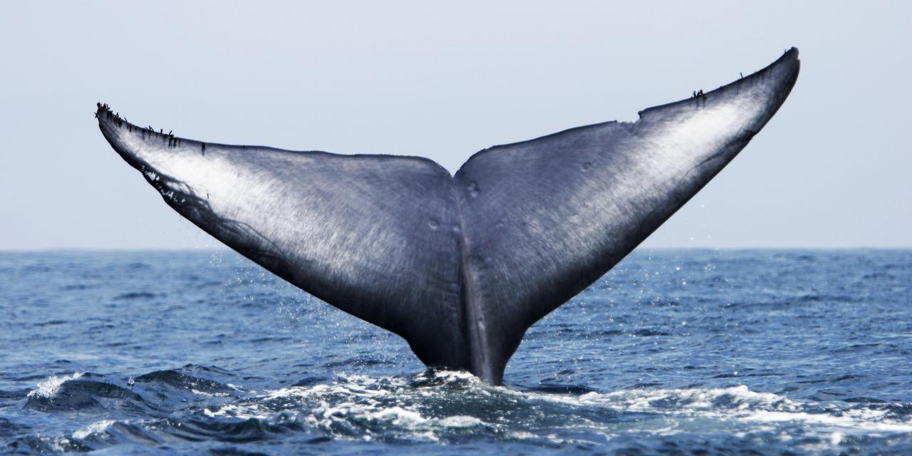 Drawn whale humongous World's the The loneliest Earth