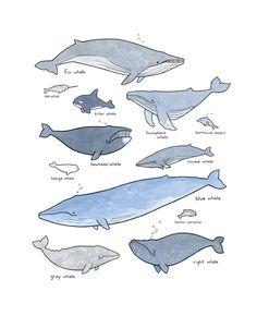 Drawn whale humongous Pinterest tattoos whales illustration Pesquisa