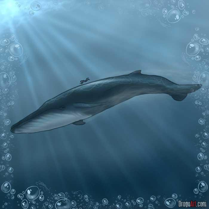 Drawn whale humongous Whale Step a FREE how