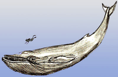 Drawn whale humongous Draw Step Whale How to