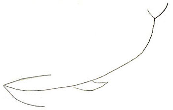 Drawn whale humongous A Step Draw How to