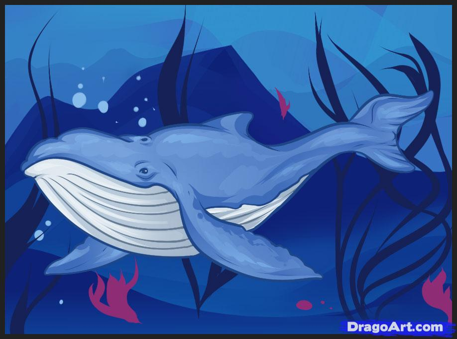 Drawn whale realistic Whale animals by Sea Animals
