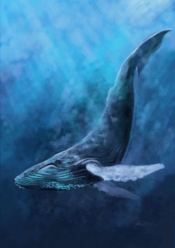 Drawn whale realistic Drawing ideas illustration illustration The