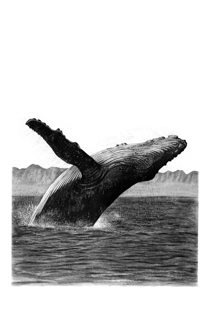 Drawn whale realistic Research images whale best Whale