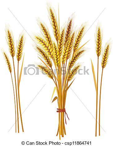 Barley clipart wheat leave Wheat clip white free two
