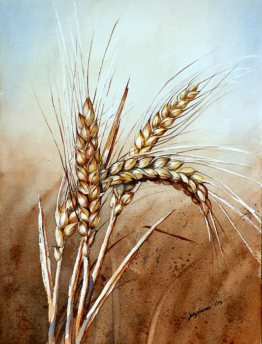Drawn wheat Your by Posters  Art
