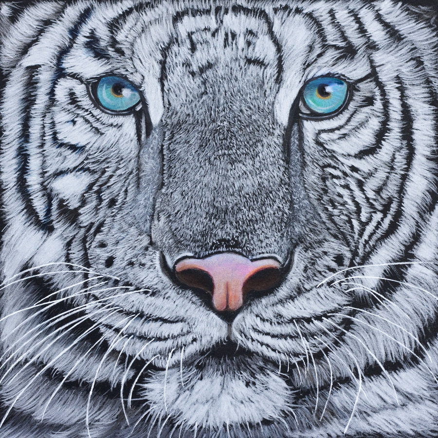 Drawn white tiger · White White ideas Sarahharas07