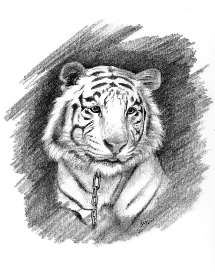 Drawn white tiger Beautiful Tiger Image Tiger Images