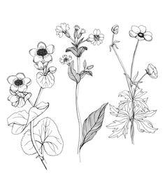 Drawn wildflower Tumblr drawing Google Tattoos