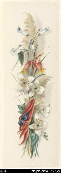 Drawn wildflower australian wildflower On 33 pea Meredith 1812