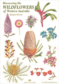 Drawn wildflower australian wildflower Margaret : Discovering Western of