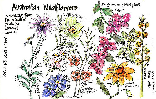 Drawn wildflower australian wildflower Copying Wildflowers  Wildflowers Australian