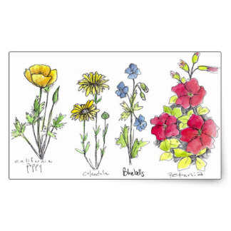 Drawn wildflower australian wildflower Wildflower Ink Wildflower Ink Black