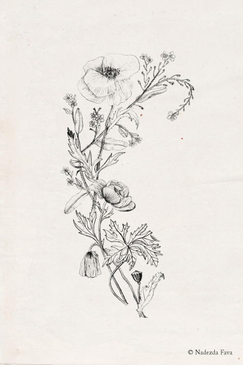 Drawn wildflower basic #2