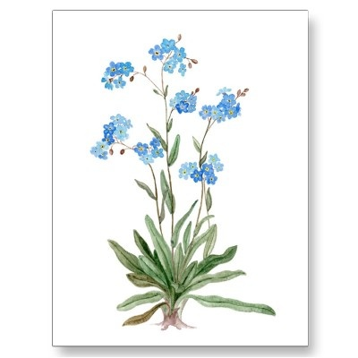 Drawn wildflower forget me not Of Forget best Postcard me