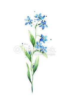 Drawn wildflower forget me not Not More Vector Clip Forget