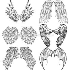 Drawn wings Vector Drawn Drawn  feathered