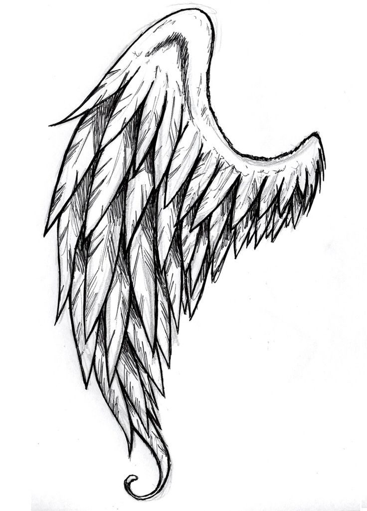 Drawn wings How Vector Google Hand draw