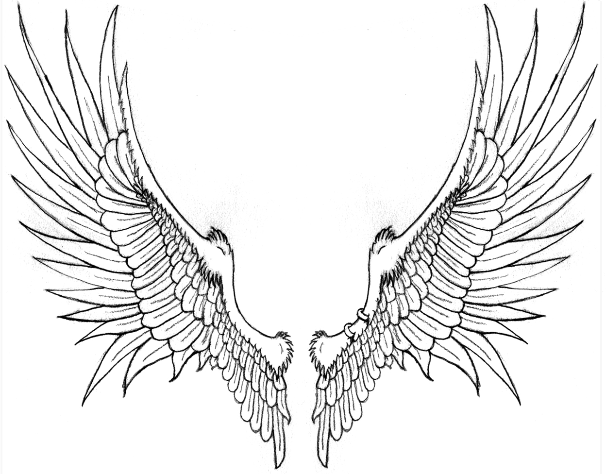 Wings clipart drawn Feathers  and com/download more