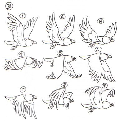 Drawn stairs animated Pin Creature Wings images Anatomy