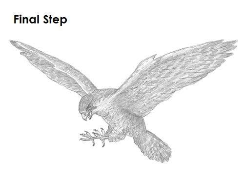 Drawn falcon falcon wing To a Falcon Draw Falcon