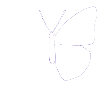 Drawn butterfly one Drawing to Step Butterfly a