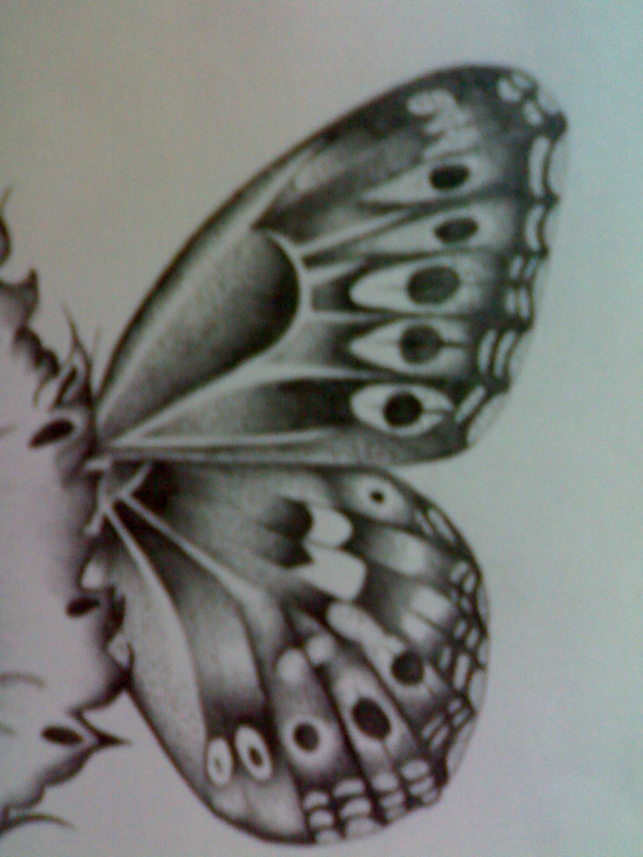 Drawn butterfly side view Butterfly View Butterfly photo#2 wings