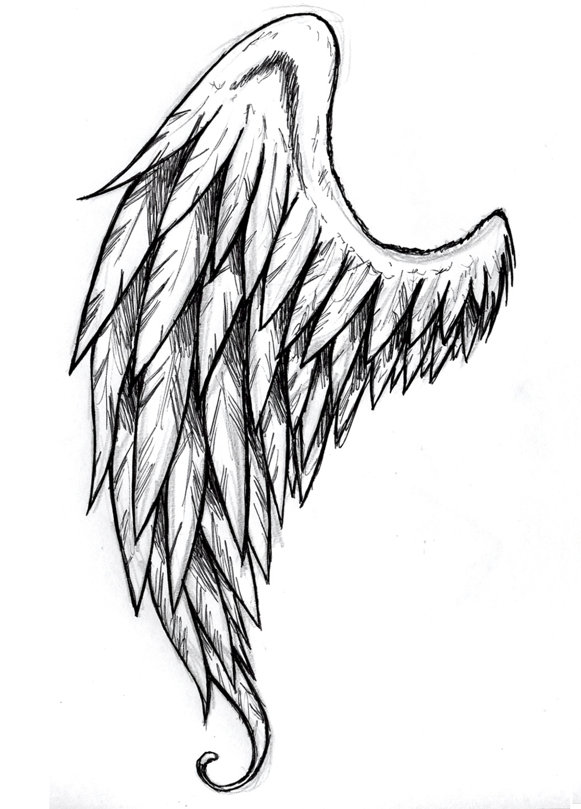 Drawn angel torn wing Maybe tattoo Hand feather Vector