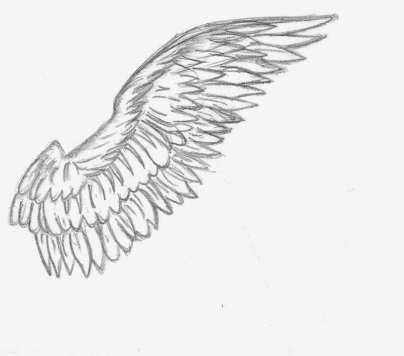 Wings clipart sketched Con Buscar Google Croquis DRAWINGS