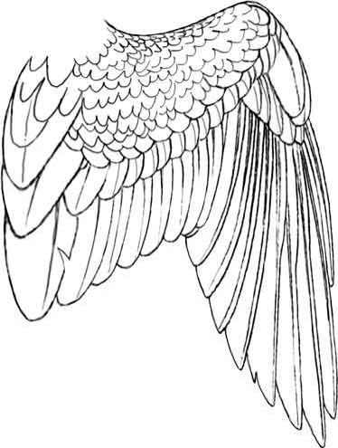 Drawn angel folded wing Amino 2 Wings 2 pt