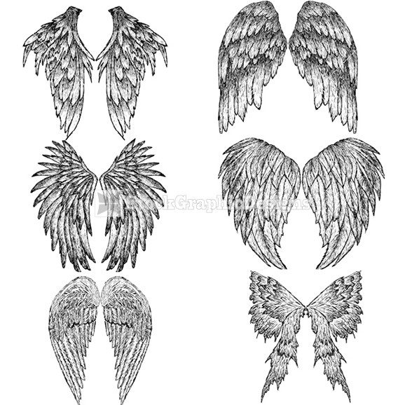 Drawn angel hand drawn Wings feathered Illustration Illustration draw
