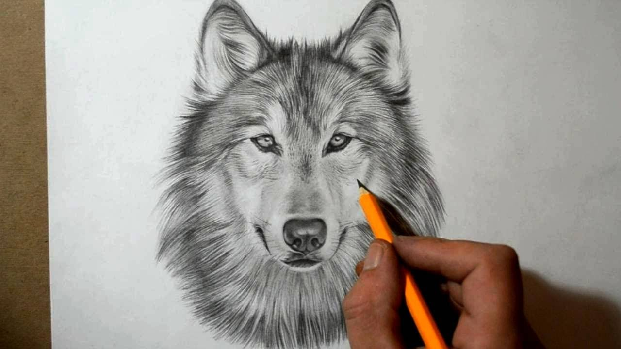 Drawn werewolf pencil drawing To YouTube How Draw