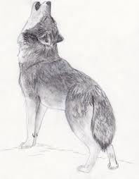 Drawn wolf Drawn Thefreerunner1995 on Thefreerunner1995 by
